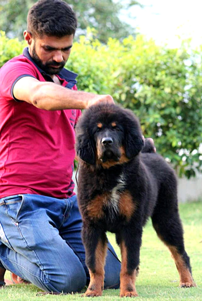 Best pet shop in delhi